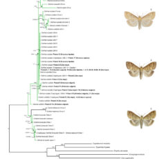 High regional genetic diversity and lack of host-specificity in Ostrinia nubilalis (Lepidoptera: Crambidae)